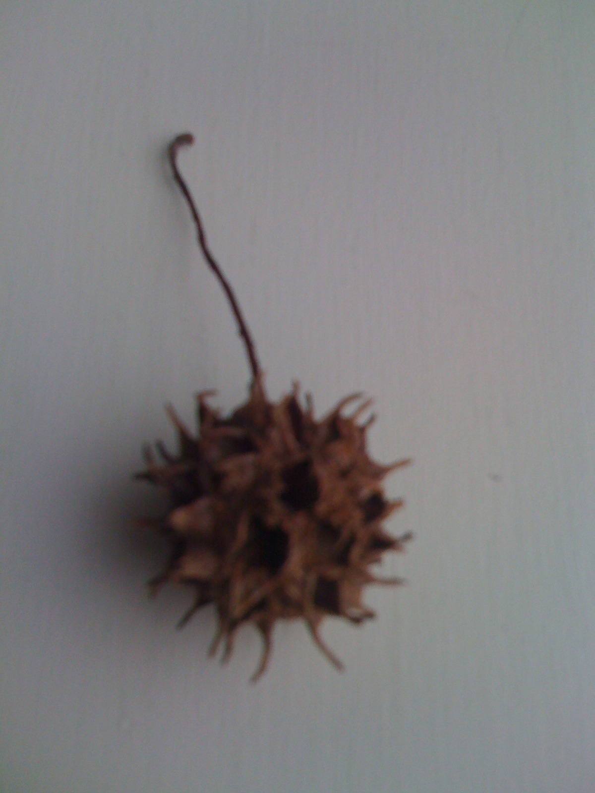 Tree Seeds Identification http://outwalkingthedog.wordpress.com/2010/02/13/seed-pods-and-eyeballs/