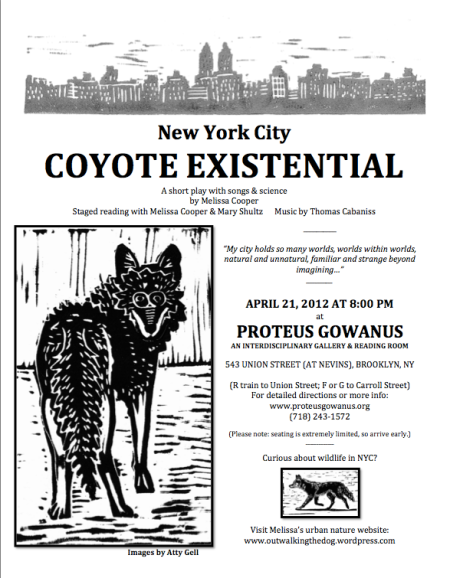 NYC Coyote Existential by Melissa Cooper