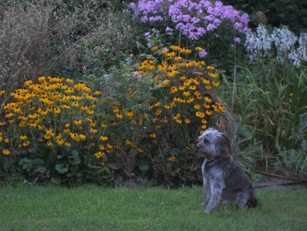 Gray dog with flowers