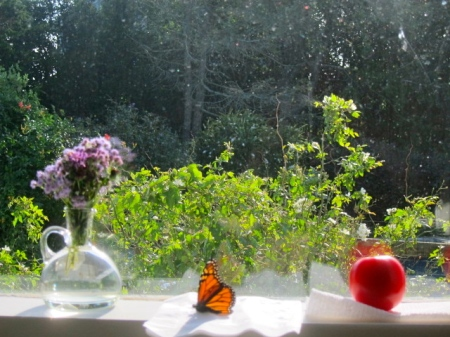 still life with monarch butterfly
