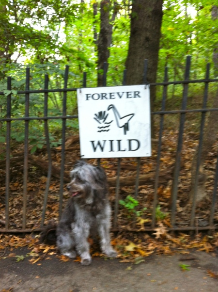 dog and forever wild sign