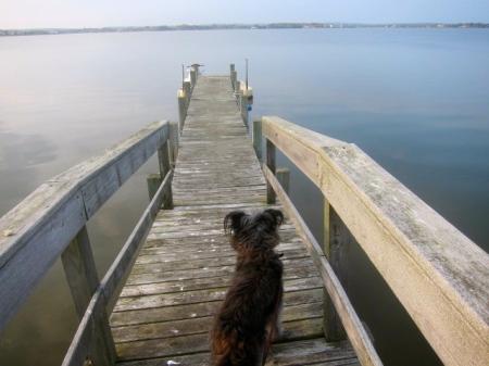 pier on Mecox bay