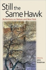 Still the Same Hawk: Reflections on Nature and New York