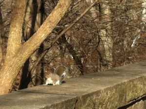 A few kissing noises draw a curious squirrel.