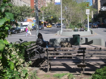 The median is a multiple-use miniature park, and its users come from many species.