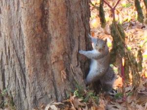 Squirrel watches Esau.