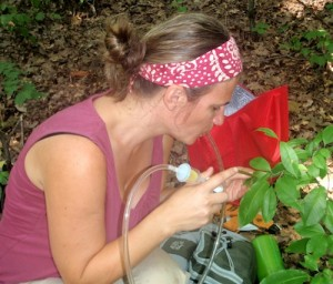 Amy uses the aspirator. (Click image to go to Your Wild Life blog.)