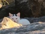 White kitten, Randall's Island, NYC.