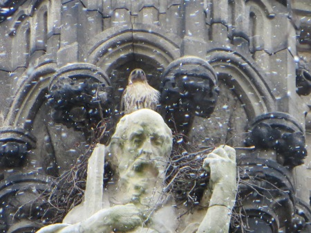 Hawk and saint in the snow.