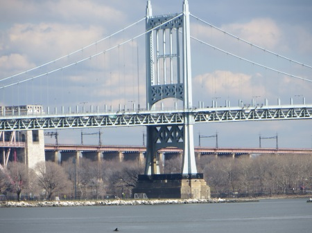 Dolphin in front of RFK Bridge. Photo: Melissa Cooper