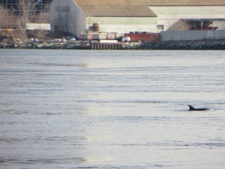 Dolphin near 96th Street.