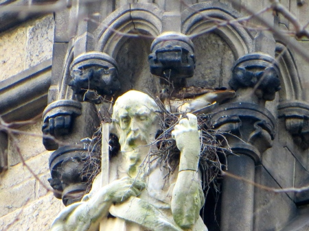Nesting on the shoulders of St Andrew.