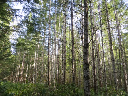Garden Bay Provincial Park