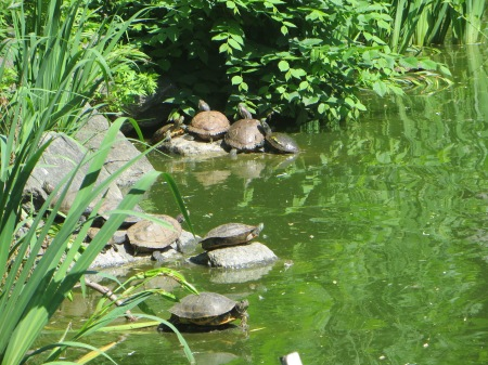 Turtle pile-up.