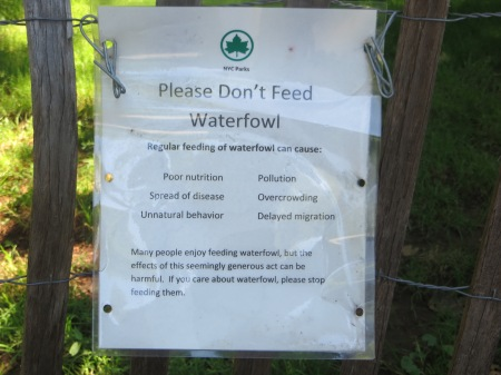 Please Don't Feed Waterfowl.