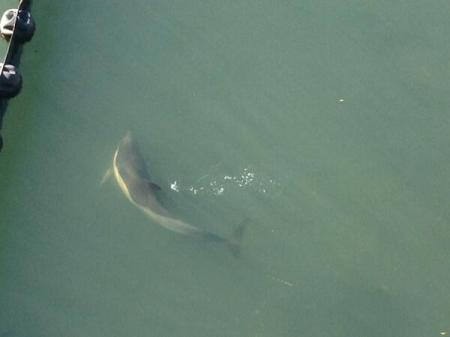Dolphin in Coney Island Creek. Image: News 12 Brookyln