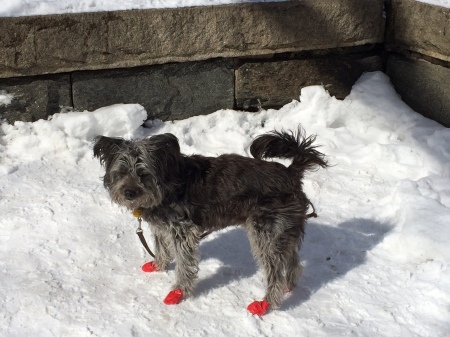 The red shoes: Dance, little dog, dance.